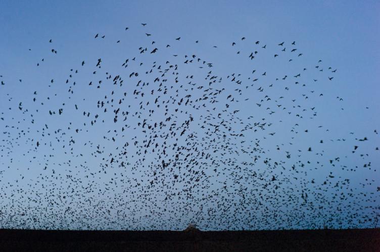 flying birds over urban waste management disposal land in ploiesti romania